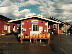 Pumpkin Patch Clarksville Tn 2015 by Three Pumpkins Show On Arkansas Pumpkin Patch Holland Bottom Farm