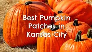 Pumpkin Farm Illinois Best by 15 Best Pumpkin Patches In The United States Sarah Scoop