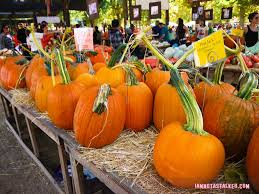 Pumpkin Patch With Petting Zoo Inland Empire by Live Oak Canyon Pumpkin Patch Iamnotastalker