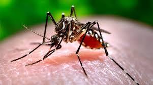 mücken bekämpfen was hilft gegen mücken