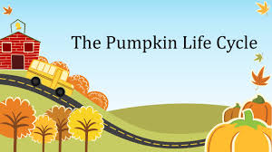 Stages Of Pumpkin Growth by The Pumpkin Life Cycle Seed Pumpkin Seeds Grow In The Hallowed
