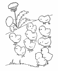 Farm Animal Coloring Page Free Printable Chicken Pages Featuring Baby Chicks Out For A Walk Sheets