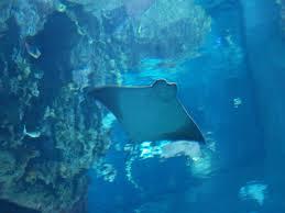 Galveston Texas Moody Gardens Aquarium Pyramid 2010 exhibi…