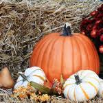 Halloween Activities In Nj by The Best Halloween Events For Families In Nj Best Of Nj Nj