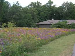 Go Native Or Go Wild! | News Free Images Blossom Lawn Flower Bloom Backyard Botany Go Native Or Wild News Creating A Wildflower Meadow From Part 1 Youtube Wildflower Garden Update Life In Pearls And Sports Bras Budapest Domestic Integrity Field Of Wildflowers She Shed Decorating Ideas How To Decorate Your Backyard Pics Best 25 Meadow Garden Ideas On Pinterest Rockoakdeer Neighborhood For National Week About Texas A Whole Wildflowers For Tears The Duster Today Fields Flowers Design With Apartment Balcony