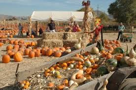 Sand Springs Pumpkin Patch by Halloween Pumpkin Patches And Corn Mazes Reno Sparks Nevada Nv