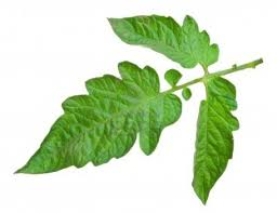 Dessins Gratuits à Colorier Coloriage Légume à Imprimer