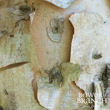 Christmas Tree Shop Shrewsbury Ma by Buy Trees Online Bower U0026 Branch