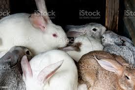 gruppe kaninchen in ihrem wohnzimmer stockfoto und mehr bilder 2015