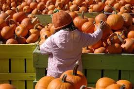 Pumpkin Patch Western Massachusetts by Best Pumpkin Patches In Washington D C
