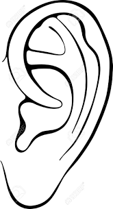 Human Ear Isolated White Background Royalty Free Cliparts