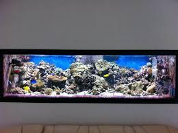 aquarium dans le mur recifal mon bac de 1358l brut guillaume présentation