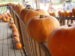 Pittsburgh Area Pumpkin Patches by Eastside Pumpkin Patches Gear Up For Fall Bellevue Wa Patch