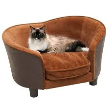 cat sofa 187 best beds that look like furniture images on
