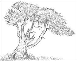tree cypress drawing