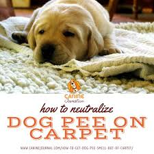My Dog Pees On My Bed by The 25 Best Dog Smell Ideas On Pinterest Dog Urine Remover