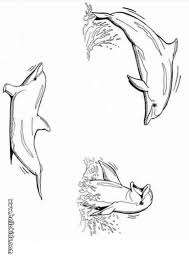 Funny Dolphin Playing Dolphins Coloring Page