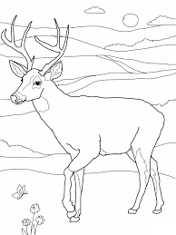Coloring Pages Of Deer Free Printable For Kids Download