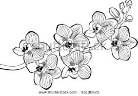 Orchid Branch Isolated White Background Stock Vector
