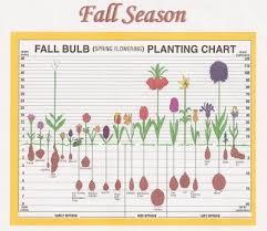 fall bulb planting chart henrietta garden club