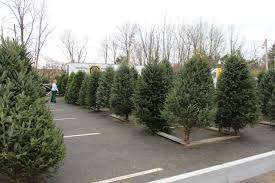 Kroger Christmas Trees 2015 by Bill Stone U2013 Centerville Noon Optimist
