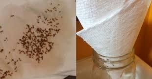 moucherons cuisine dites adieu aux mouches à fruits et aux moucherons avec 6