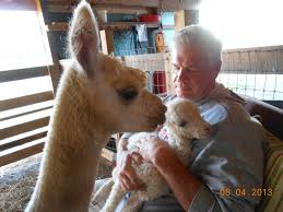 Buckeye Star Alpacas: August 2013 Professional Senior Vet Standing Near Calves Barn In Livestock Veterinary Skills Center Lincoln Memorial University About Us Meadowridge Hosp Groton Ny Red Hospital Vetenarian Dahlonega Ga Usa Houses Missing Family House Old Wooden Shed Pine Path Photo Gallery Mccmaple Woods Tech Hosts Successful Haunted Farmer And Vet With Turkey In Barn Stock Royalty Free Image Midsection Of Female Examing Horse At Project 365 Day 16 Vintage Emily Carter Mitchell Sugar Factory Clinic Horse Stethoscope Photos