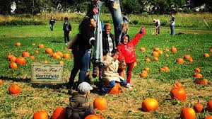Tallahassee Heights Pumpkin Patch by New York Things To Do And Discounted Deals