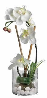 les 25 meilleures idées de la catégorie orchidée blanche sur