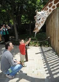 Brookfield Zoo Halloween Activities by Brookfield Zoo Guests Can Now Meet Penguins Feed Giraffes Wgn Tv