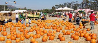 Monrovia Pumpkin Patch by Underwood Family Farms