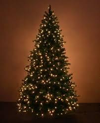 Christmas trees Real or fake BBC News