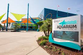 Cut Your Vacation Cost With Myrtle Beach Aquarium Coupons Turtle Beach Coupon Codes Actual Sale Details About Beach Battle Buds Inear Gaming Headset Whiteteal Bommarito Mazda Service Vistaprint Promo Code Visual Studio Professional Renewal Deal Save Upto 80 Off Palmbeachpurses Hashtag On Twitter How To Get Staples Grgio Brutini Coupons For Turtle Beaches Free Shipping Sunglasses Hut Microsoft Xbox Promo Code 2018 Discount Coupon Ear Force Recon 50 Stereo Red Pc Ps4 Onenew