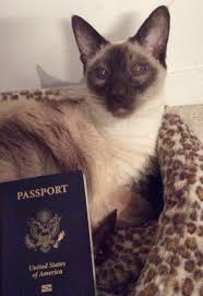 arlington cat clinic does my cat needs a passport to travel cat clinic