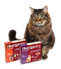 heartgard for cats into summer with worm preventative feline