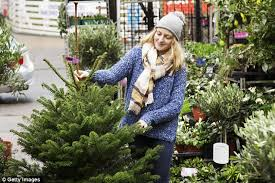 Best Smelling Christmas Tree Types by How To Pick The Best Christmas Tree This December Daily Mail Online