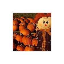 Best Pumpkin Patch Near Roseville Ca by Fall Maze At Sweetfields Farm Brooksville Fl Kids Events