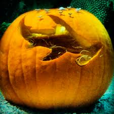 Easy Shark Pumpkin Carving by Carving Out A Niche You Won U0027t Want To Chuck These Awesomely