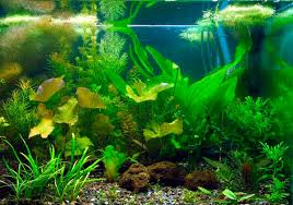 aquarium d eau douce aquarium aquarium eau douce aquarium eau de mer dinosoria