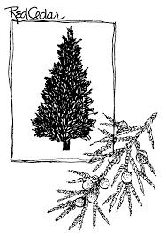 Christmas Tree Cutting Permits Colorado Springs by Christmas Tree Permits Colorado Home Design Inspirations