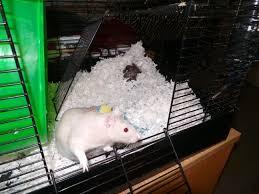 fleece bedding the rat lady best for snake img msexta