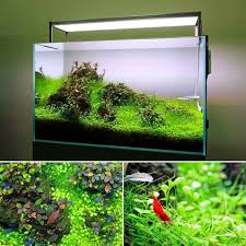 Eye-catching Layout By TWINSTAR! Aquascape With Different ... Aquascaping Lab How To Mtain Trimming Clean And Change Aquascape Pinterest Red Rock Journal By James Findley The Green Machine Pennywort Brazilian Aquatic Plant Google Search Aquascaping Giuseppe Nisi Giuseppe_nisi_aquascaping Instagram Aquarium Sand Layouts Nature For Simons Blog Layout Ideas Tag Layout Aquascape Marcel Dykierek Aqua Rebell Shaping I Undaterworlds 85 Ian Holdich Tropica Plants