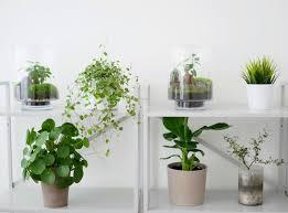plante de bureau mettez vous au vert en adoptant un plante de bureau skywork