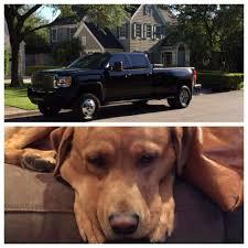 100 Amigo Truck Stolen Dog Reunited With Owner Days After It Was Taken In Truck