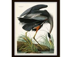 Vintage Audubon Blue Heron Bird Print Giclee Art Poster Home Decor