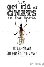Flying Ants In Bathroom Window by Best 25 Gnats In Kitchen Ideas On Pinterest Flying Ants In