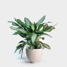 17 wundervolle zimmerpflanzen für ihr wohnzimmer die luft