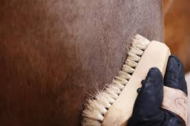 Shedding Blade For Horses by Essential Products And Supplies For Every Horse Owner