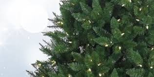 Christmas Tree Species Usa by Shop Christmas Trees At Lowes Com