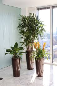 Interior Plants - Plant Peddler Beautiful Home Designs Gallery Decorating Design Ideas Stunning Amazing House Peddlers Photos Interior Expo Pictures Awesome Image Contemporary Best Idea Home Design Emejing Ca And Magazine Owensboro Mall Facebook Nice Homes Pedlars Wonderful Stuff For Your